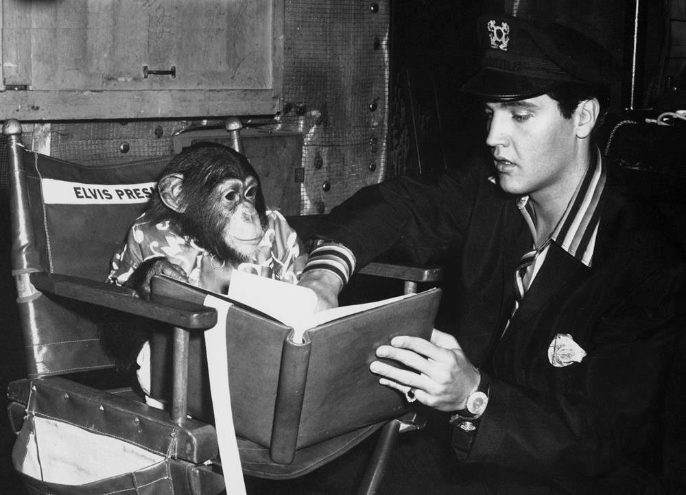 Elvis Presley Saved Life Of A Chimp Named Scatter Elvis